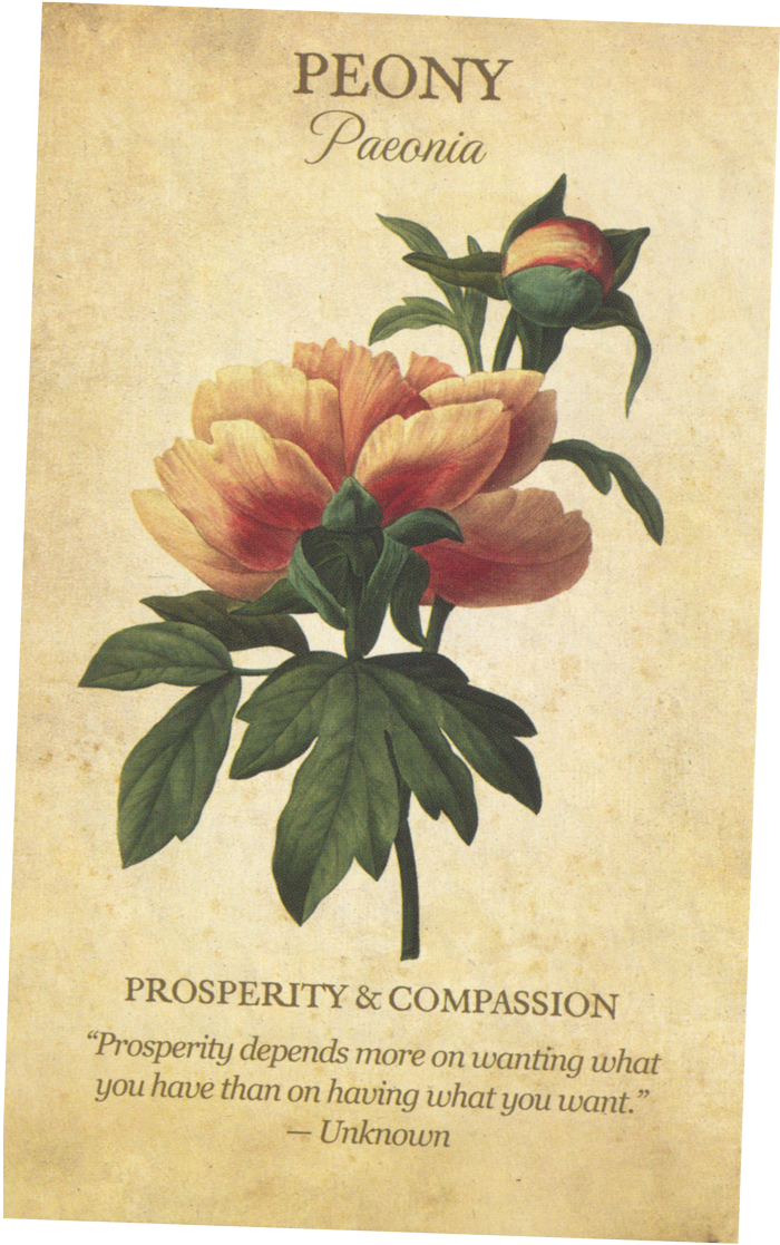 The Peony card from the Botanical Inspirations Tarot Deck
