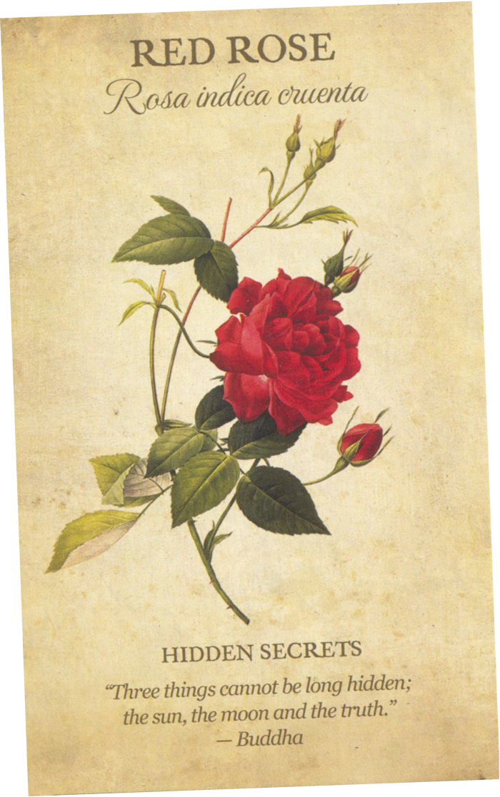 The Red Rose Card from the Botanical Inspirations Tarot Deck