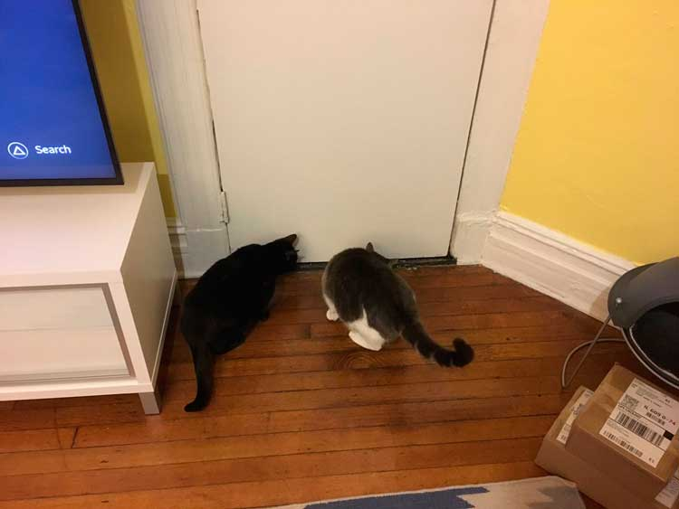 Two cats facing a door