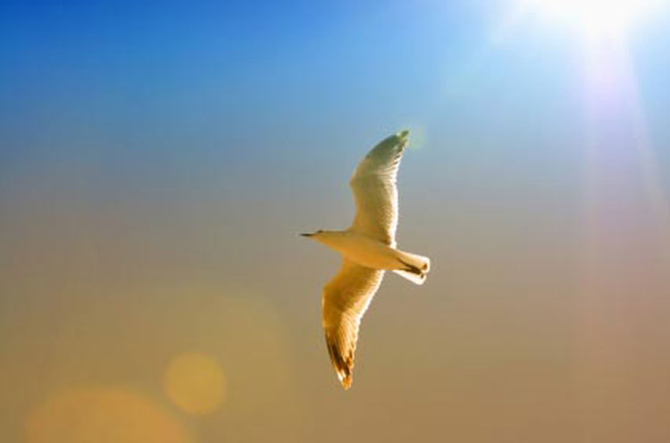 Soaring Seagull, Touching the Divine